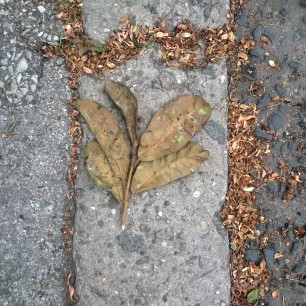 Leaf and husks on kerb