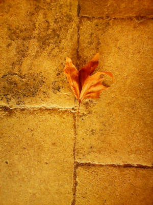 I feel like this leaf left over from autumn sometimes - not often